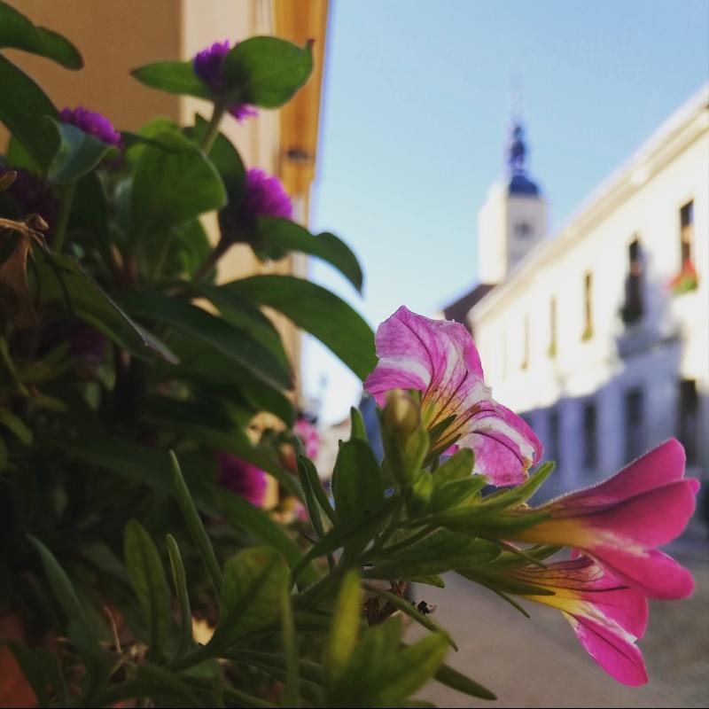 Apartmán (2+0) Centar (Varaždin), Varaždin, Chorvatsko
