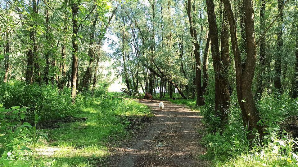 Vukovar  okolica(iznajmljivanje)ZEKO-ALJMAŠ.Smještaj u ALJMAŠU već od